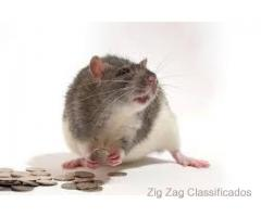 money spells ads in spain usa uk Spiritual Rats amagundane sangoma +27634299958